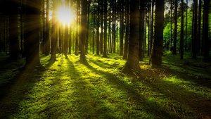 Caldera de biomasa según necesidades