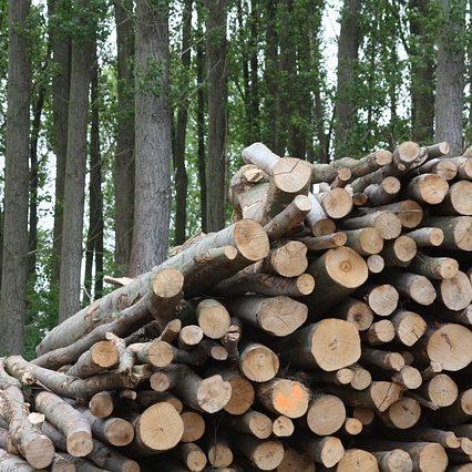 wood-825792_640 (1)